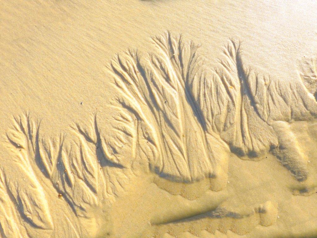 BISCAROSSE plage La Lagune dimanche 19 novembre 2017   7